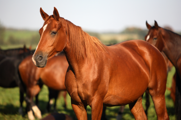 Judging Horses – What Every Bettor Should Know